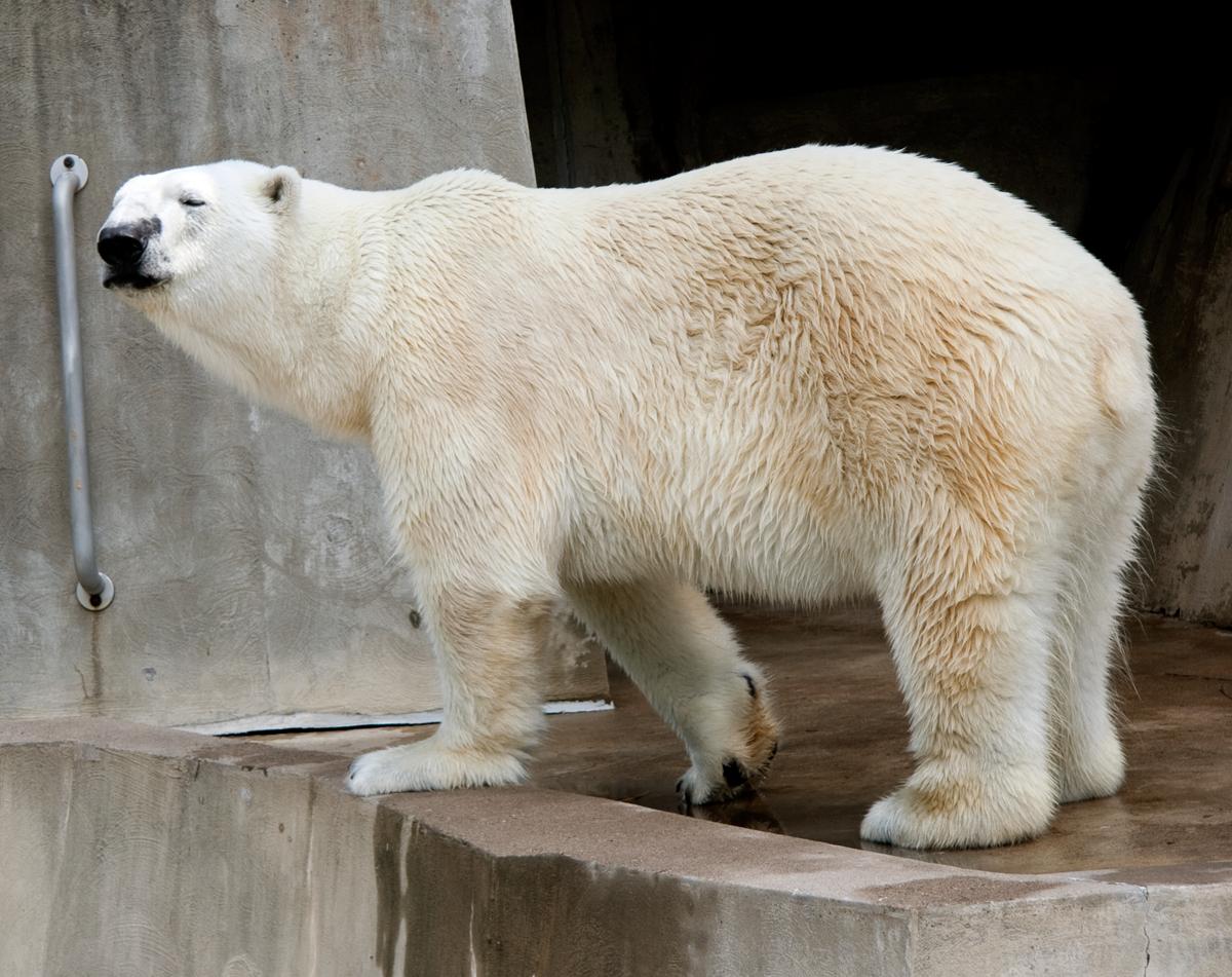 Como Zoo, St. Paul, Minnesota